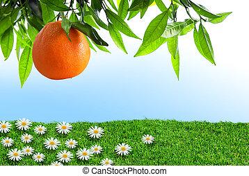 lente, sinaasappel