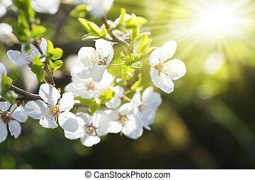 lente, sunbeams, natuurlijke , achtergrond, bloeien