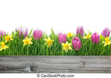lente, tulpen, en, daffodils