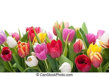 lente, tulpen