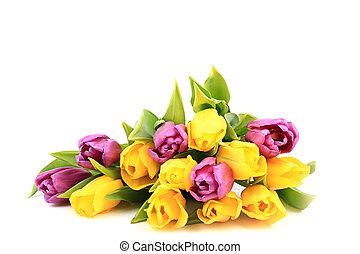 lente, tulpen, vrijstaand, op, een, witte achtergrond