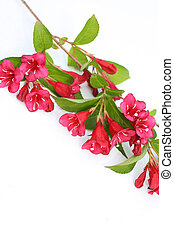 lente, witte bloemen, roze, achtergrond