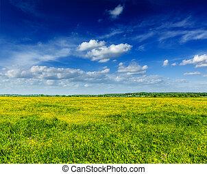lente, zomer, achtergrond, -, bloeien, akker, weide