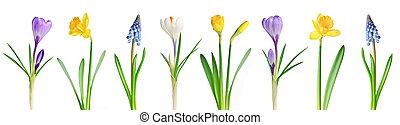 lentebloemen, in een rij