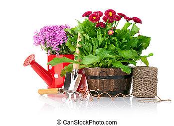 lentebloemen, met, tuinieren gereedschap