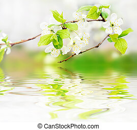 lentebloemen, op, tak, op, water, golven