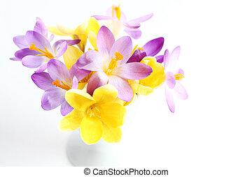 lentebloemen, op wit, achtergrond