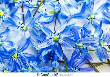 lentebloemen, snowdrops, op wit, houten, achtergrond