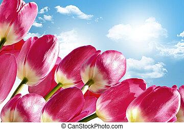 lentebloemen, tulpen, op, de, achtergrond, van, blauwe hemel, met, wolken