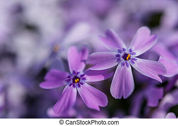 lentebloemen, zacht