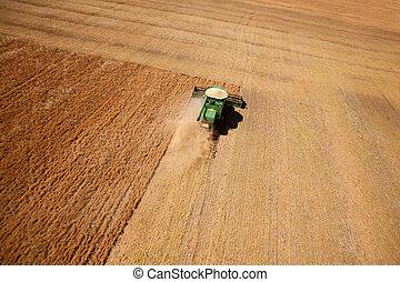 lentilha, colheita, aéreo