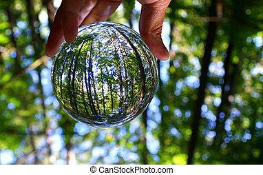 lentille, balle, vert, capturé, par, forêt, cristal