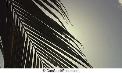 lentille, lent, soleil, motion., arbre, effects., par, flamme, paume, coucher soleil