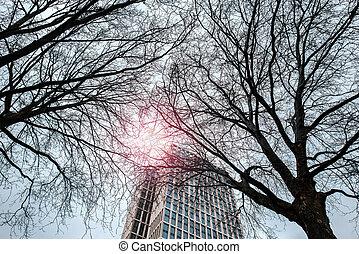 lentille, vieux, flamme, deux, arbres, effet, filtre, gratte-ciel, fond