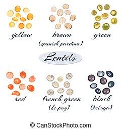 lentilles, divers, types