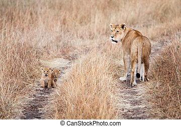 leoa, com, um, par, de, jovem, filhotes