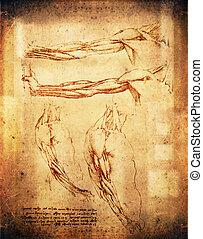 arms - leonardo da vinci style arms illustration