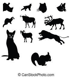 leone, gnu, capra montagna, rinoceronte, gatto, squi, scimmia, furetto, caribù