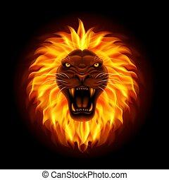 leone, isolato, testa, fondo, nero, fuoco