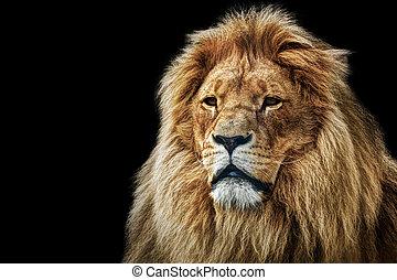 leone, ritratto, con, ricco, criniera, su, nero