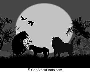 leone, safari, famiglia, notte