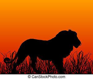 leone, tramonto, savana
