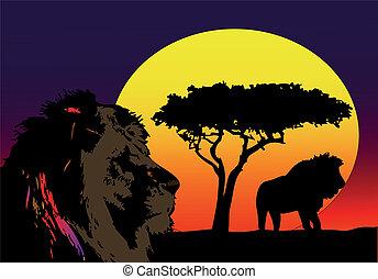 leones, en, áfrica