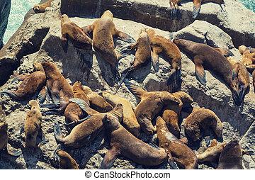 leoni marittimi