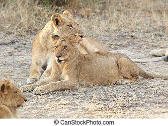 leoni, resto