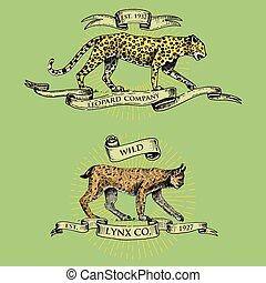 leopard and lynx logos, emblems or badges with wild animals and banners or ribbons in vintage, retro old style, hand drawn engraving. sketch