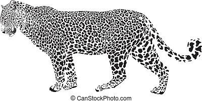 Leopard - Black and white vector illustration