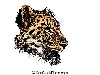 leopard head vector illustration