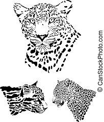 Leopard heads
