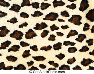 leopard, hintergrund