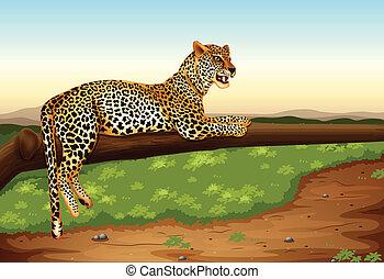 Leopard - Illustration of a leopard