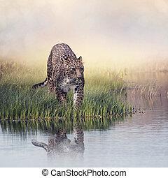Leopard in the grass near water