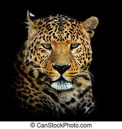 Leopard on dark background