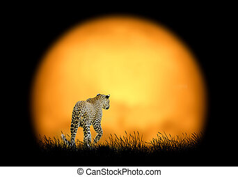 Leopard on the background of sunset