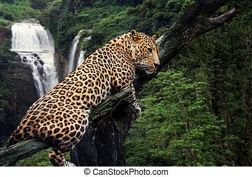 Leopard on waterfall background
