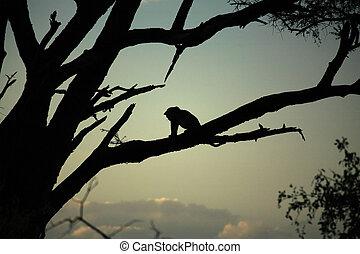 Leopard sat in a tree