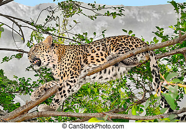 Leopard sitting on a tree branch