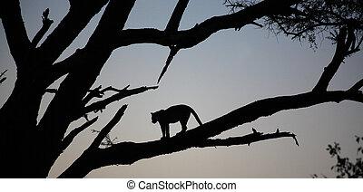 Leopard stood in a tree