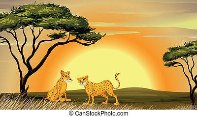 leopard, träd, under