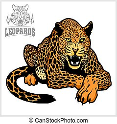 Leopard - vector isolated illustration on white background
