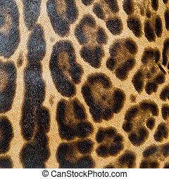 leopardo, fondo, pelle