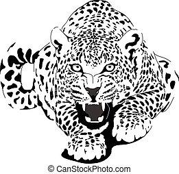 leopardo, pretas, interpretação