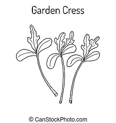 lepidium, oder, kraut, kleingarten, kulinarisch, gras, ...