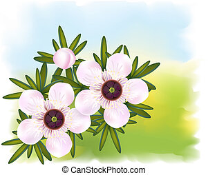 leptospermum., 정당한, 차, leaf., 나무, 꽃, 또는, manuka