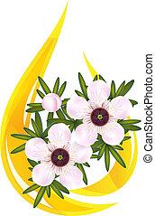 leptospermum., illustration., igazságos, tea, oil., csepp, fa, vagy, stilizált, vektor, alapvető, manuka