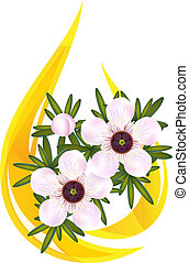 leptospermum., illustration., właśnie, herbata, oil., kropla...